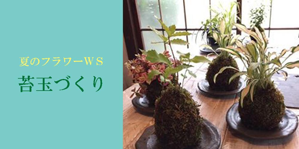 【7/13】WiLLDランチ付フラワーワークショップ『可愛らしい&清涼感 夏の苔玉づくり』